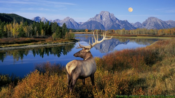 Deer and river