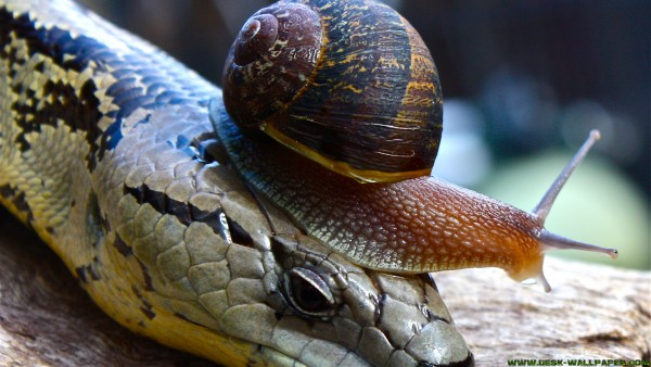 Snail on the snake