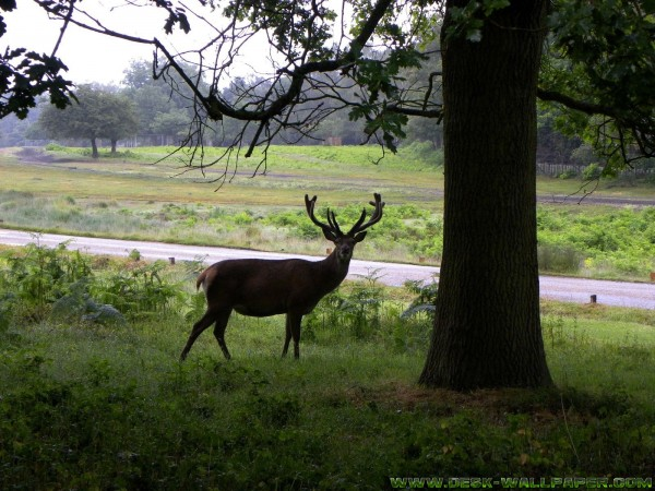 A deer with tree