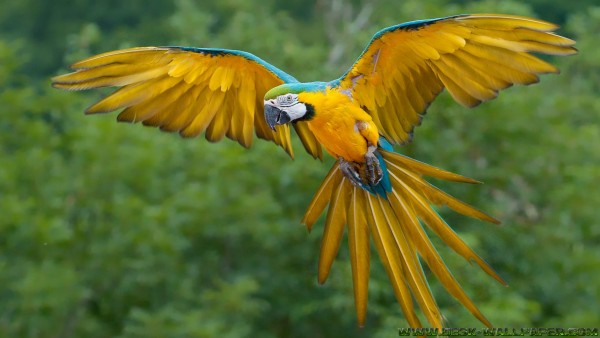 Flying parrots