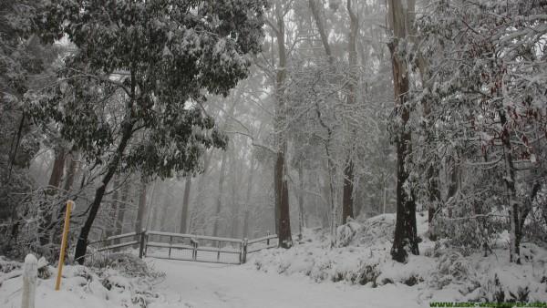 White snow power