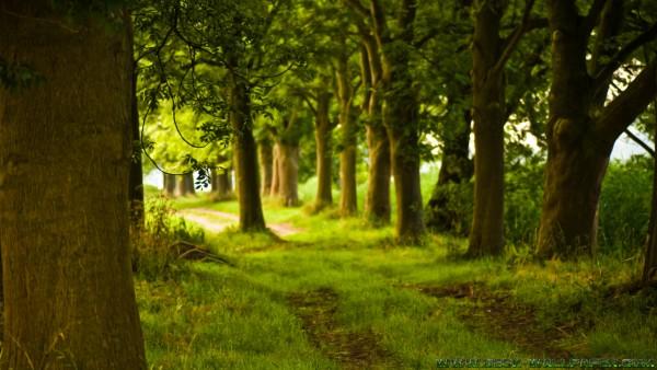 Greeny road