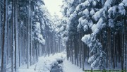 Snowy forest with small r…