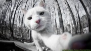 Kitten activity