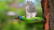 Colored flying bird