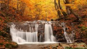 Autumn waterfall in the f…