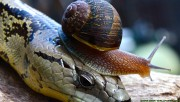 Snail on the snake