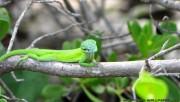 Green tiny