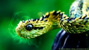 A beautiful green snake