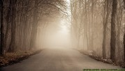 Walking on the foggy road